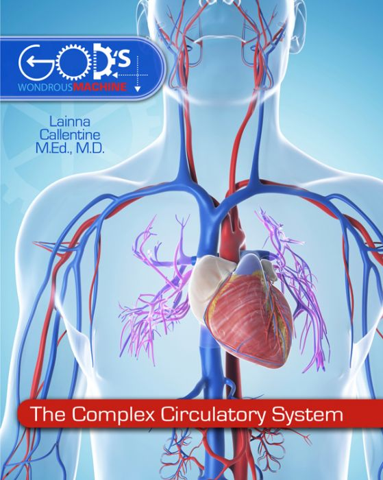 The Complex Circulatory System